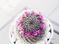CactusFlowerCrown-13