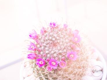 CactusFlowerCrown-14