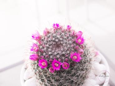 CactusFlowerCrown-15