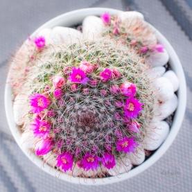 CactusFlowerCrown-17