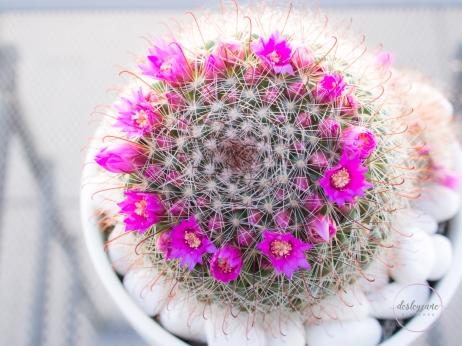 CactusFlowerCrown-2