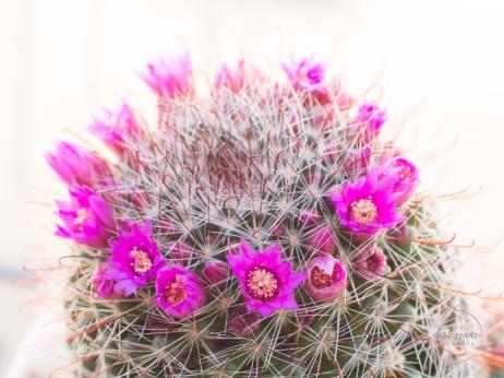 CactusFlowerCrown-5