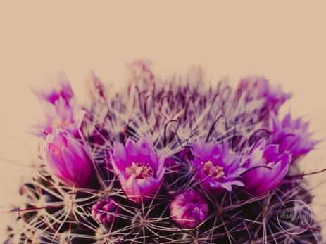CactusFlowerCrown-6