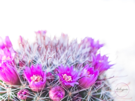 CactusFlowerCrown-7