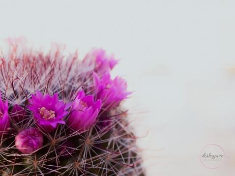 CactusFlowerCrown-8