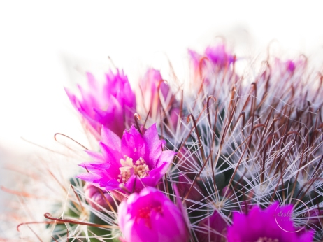 CactusFlowerCrown-9