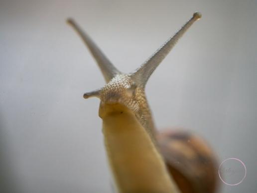 Snail-11