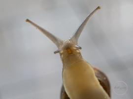 Snail-12