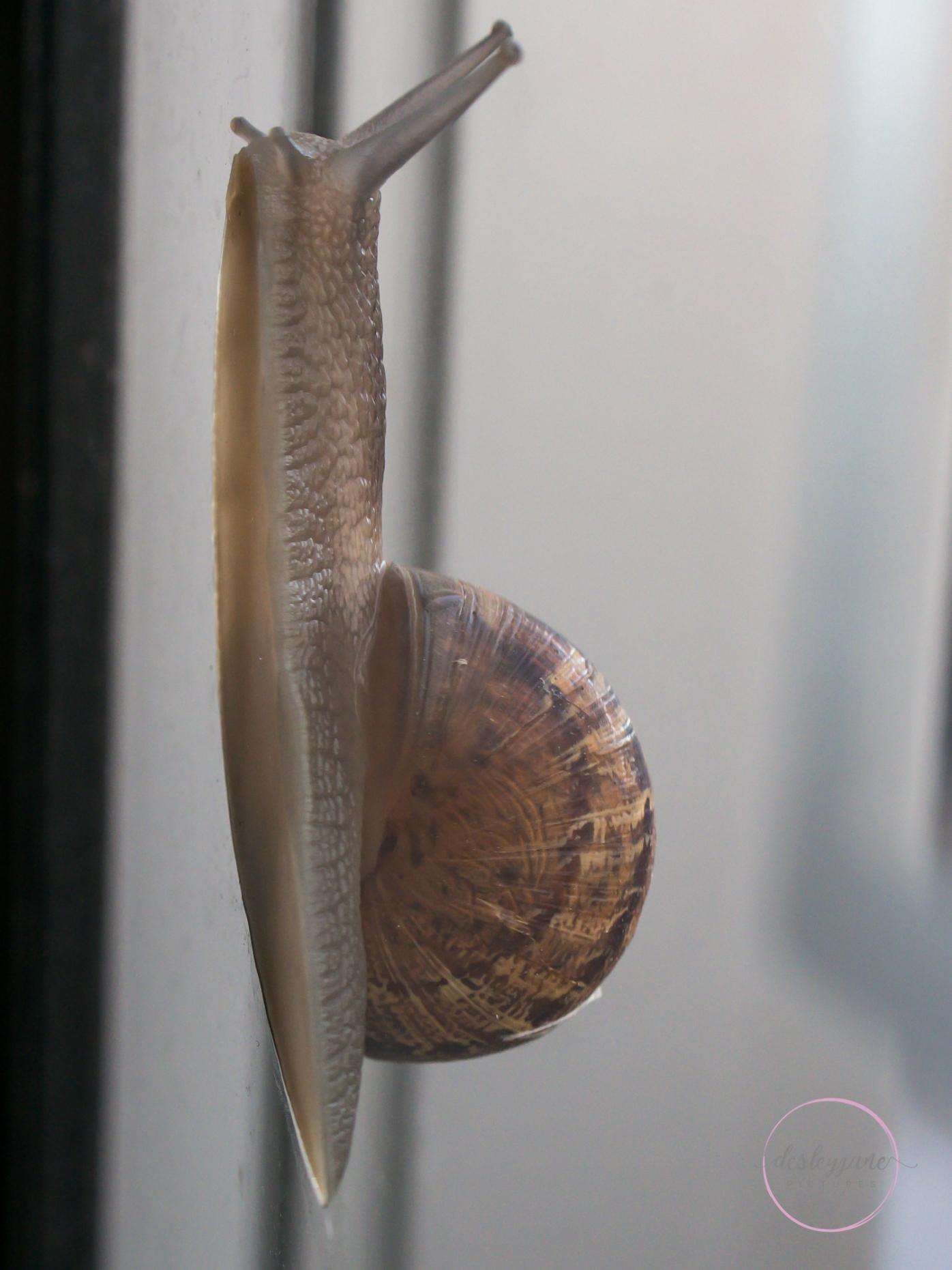 Snail-17