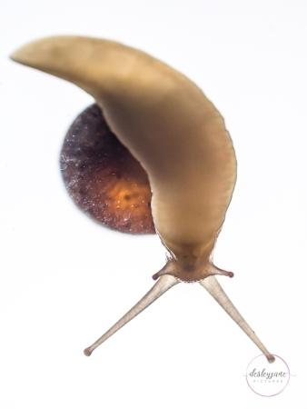 Snail-23