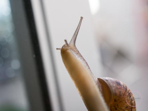 Snail-4