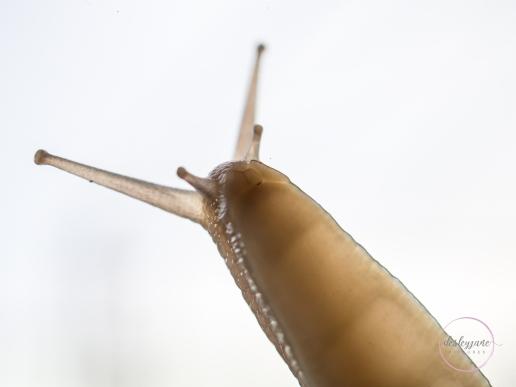Snail-5