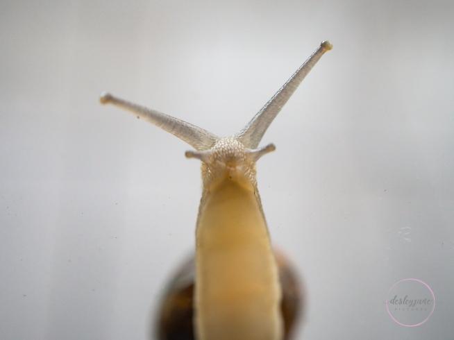 Snail-8