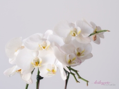 WhiteOrchid-1