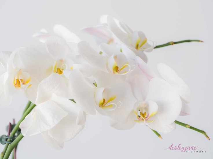 WhiteOrchid-7
