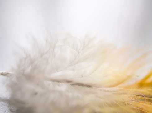 Feather-13