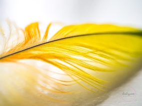 Feather-3