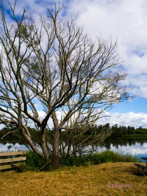201802_NZ-9
