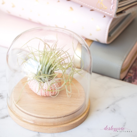 AirPlant-1