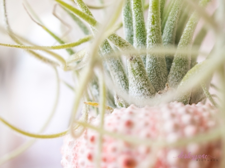 AirPlant-11