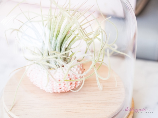 AirPlant-2