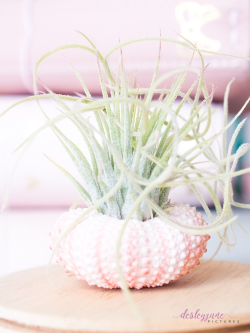 AirPlant-20