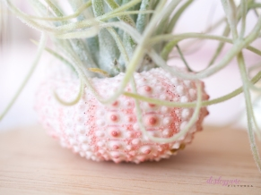 AirPlant-3