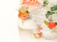 Rose_1-1