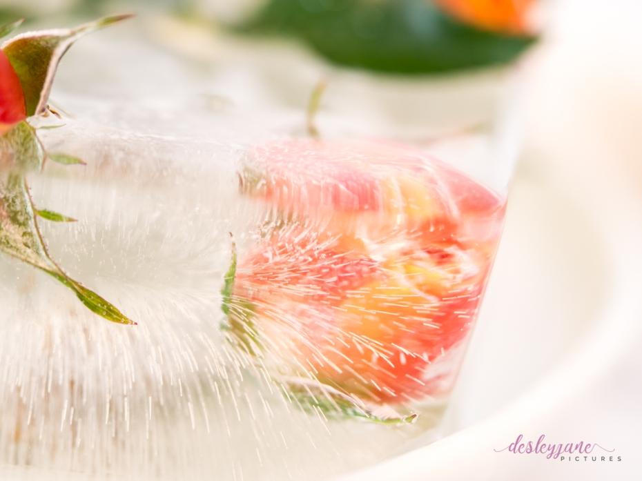 Rose_1-9