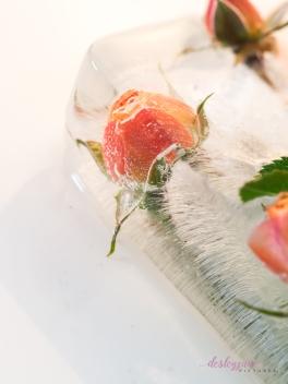 Rose_2-11
