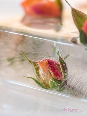 Rose_2-17