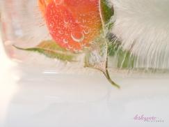 Rose_2-24