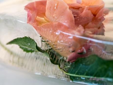 Rose_2-5