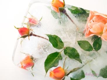 Rose_3-1