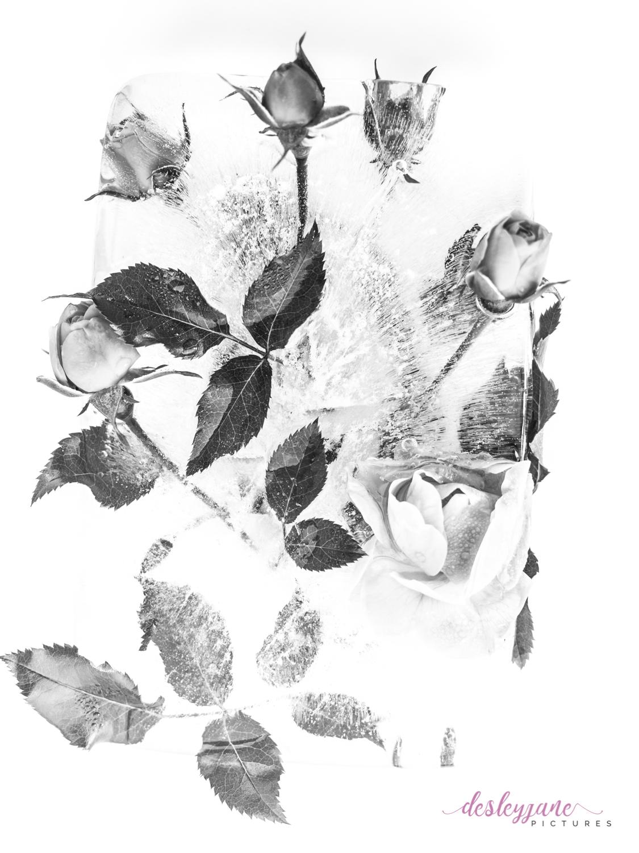 Rose_4-1