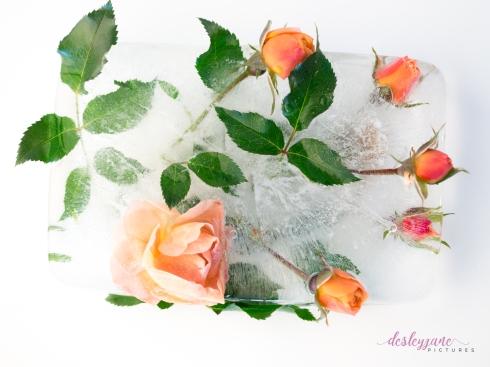 Rose_4-2