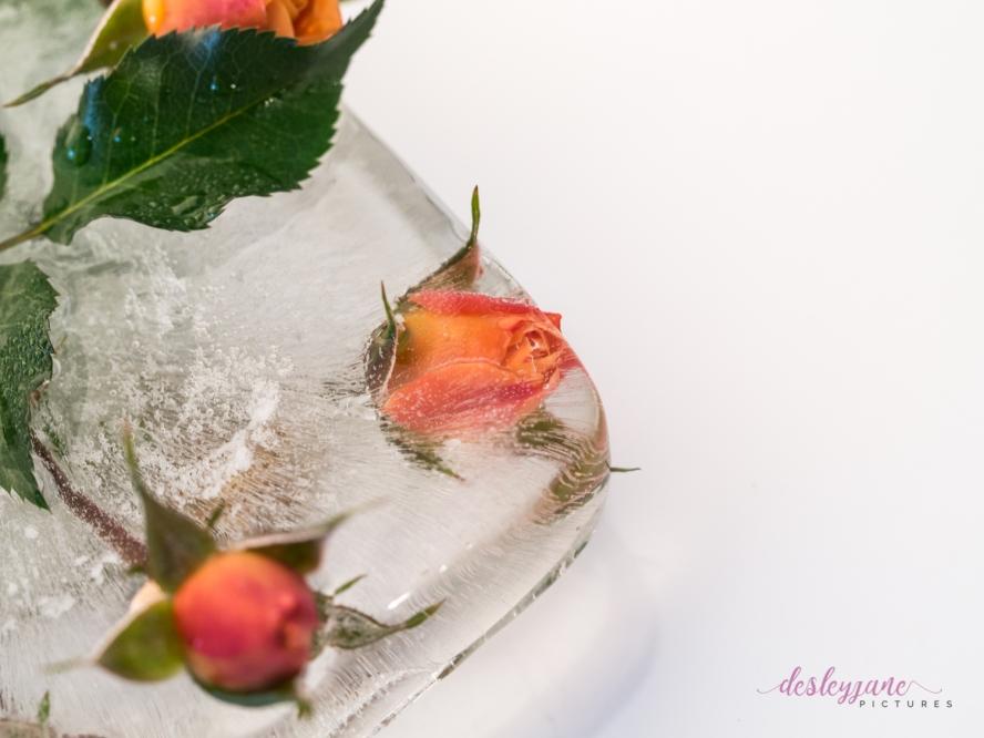 Rose_5-1
