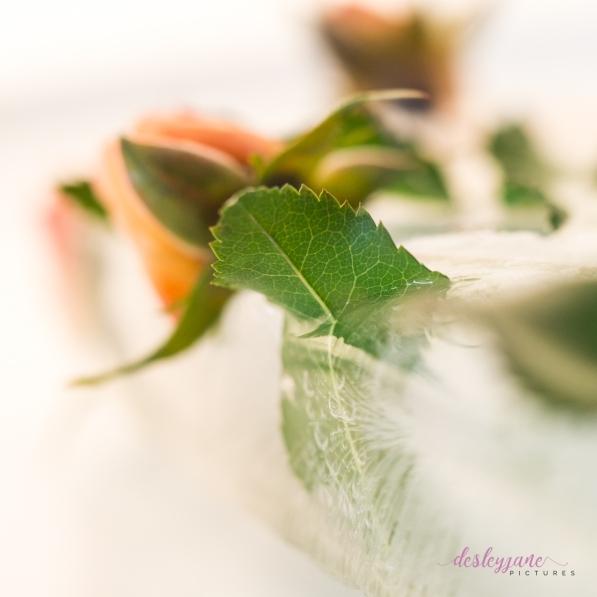 Rose_6-6