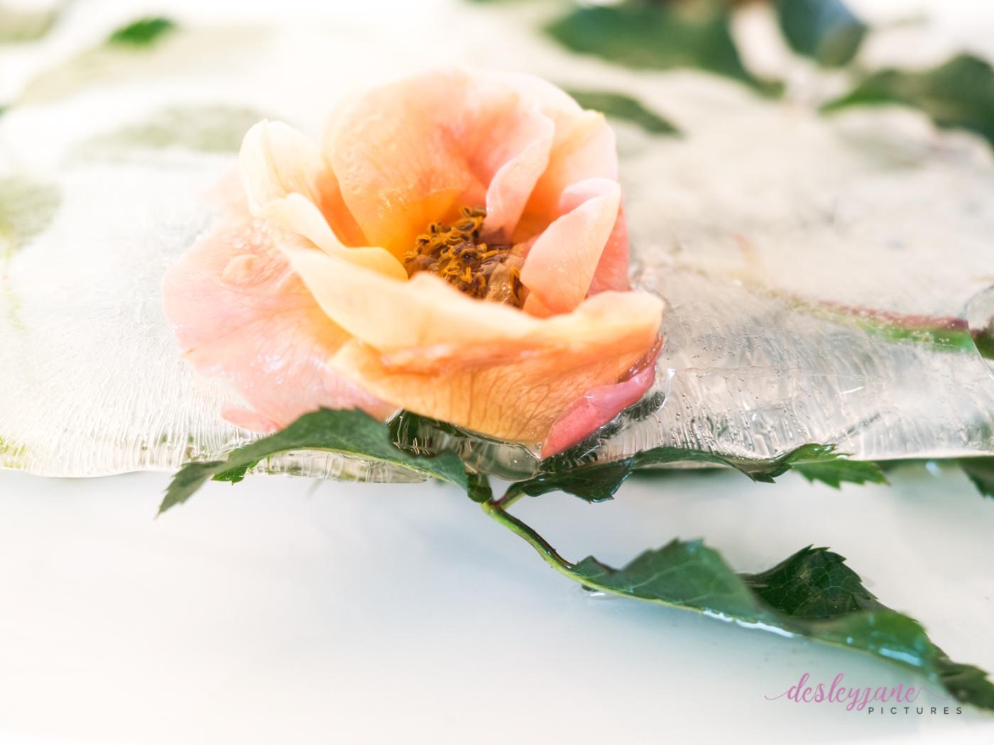 Rose_7-3