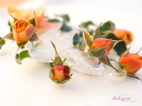 Rose_9-1