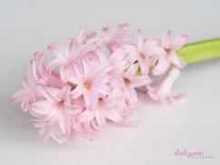 Hyacinths-18