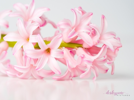 Hyacinths-32