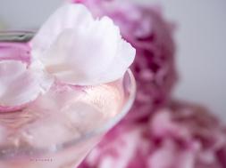 Pink Gin & Peonies-22
