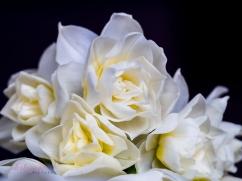 Flower Stock-10