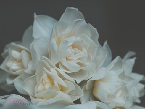 Flower Stock-11