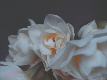 Flower Stock-12