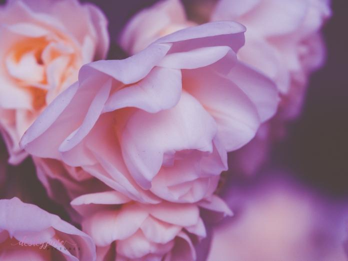 Flower Stock-13