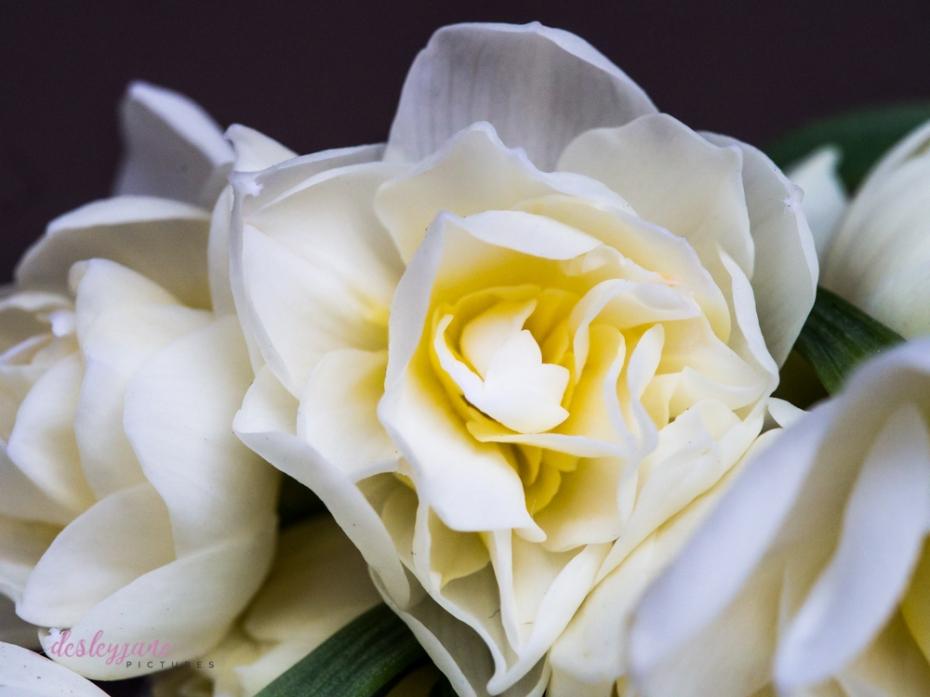 Flower Stock-14
