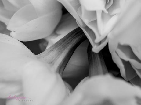 Flower Stock-15