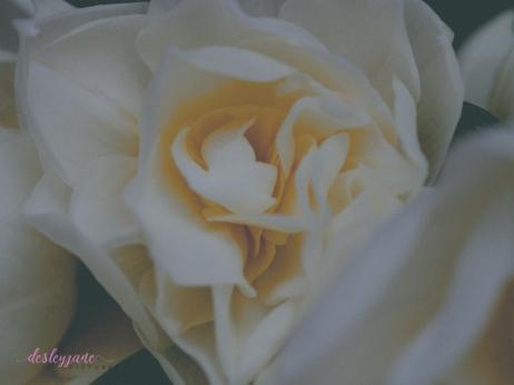 Flower Stock-16